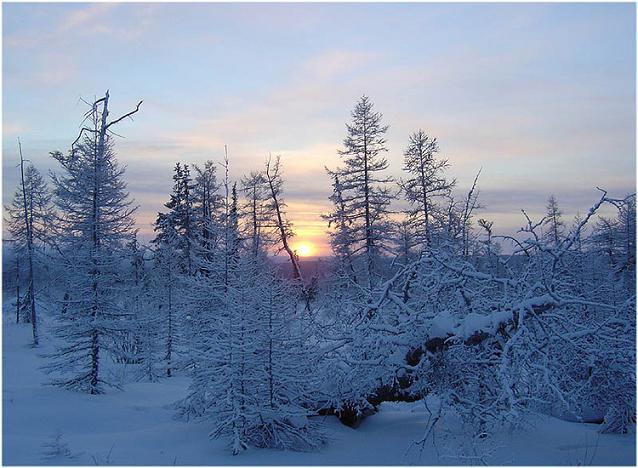 21 радиус зимняя резина