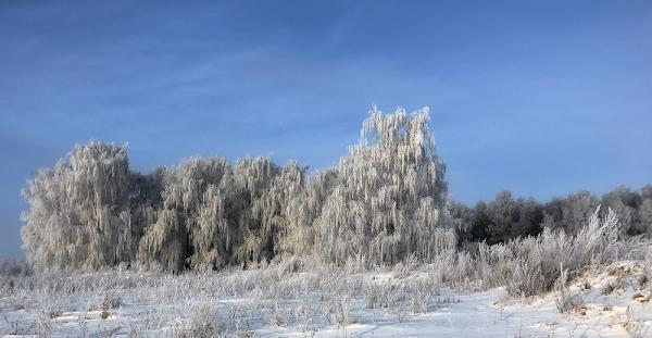 Зимняя прогулка в обед